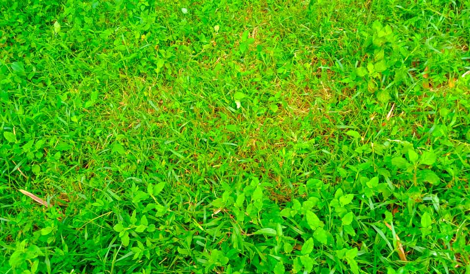 Green Grass Background Free Download